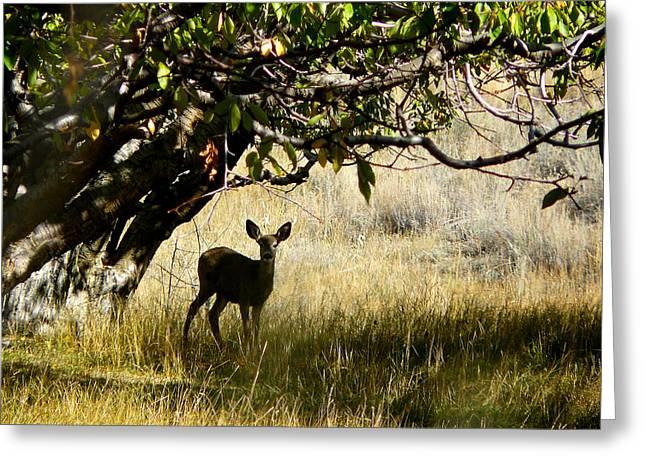 Doe In The Orchard Greeting Card
