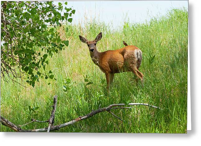 Doe Meets Bird 2 Greeting Card