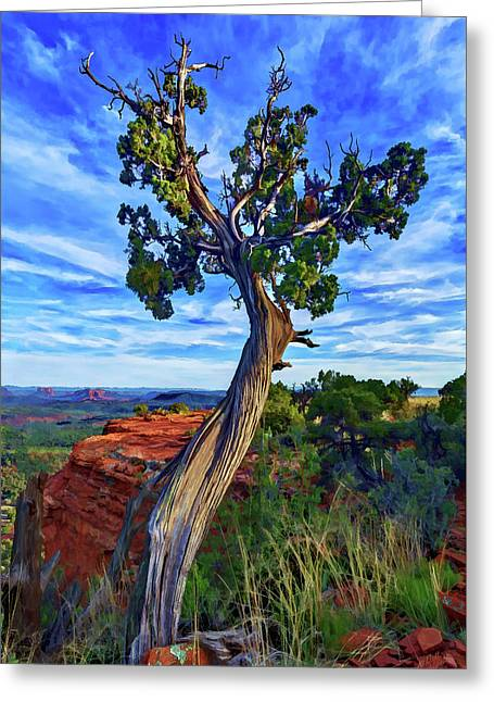 Greeting Card featuring the photograph Doe Mountain Juniper by ABeautifulSky Photography