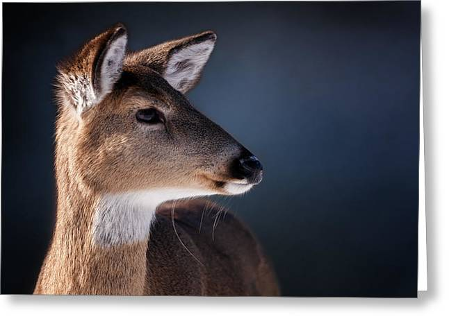 Doe Portrait - White Tailed Deer Greeting Card