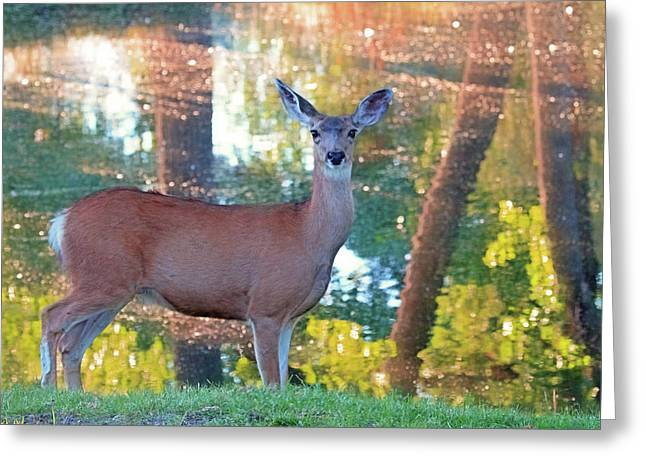 Doe Surprise Greeting Card