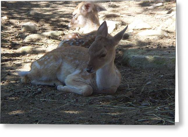 Does Resting Greeting Card by Rosanne Bartlett