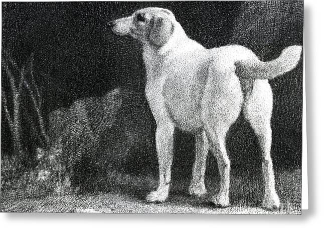 Dog, 1788 Greeting Card