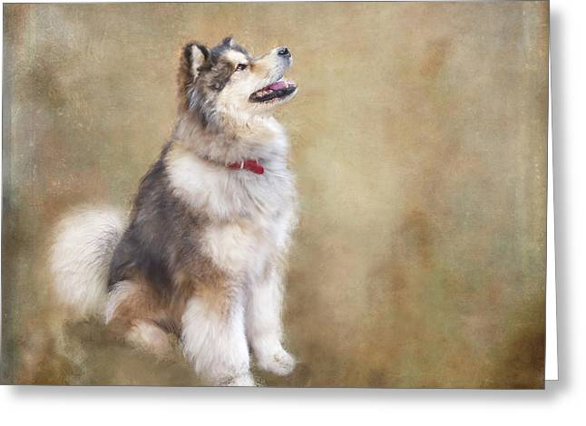 Master Of The Domain Greeting Card by Colleen Taylor