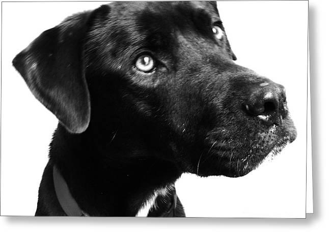 Dog Greeting Card by Amanda Barcon