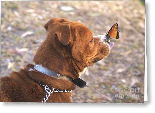 Dog And Butterfly Greeting Card by John  Kolenberg