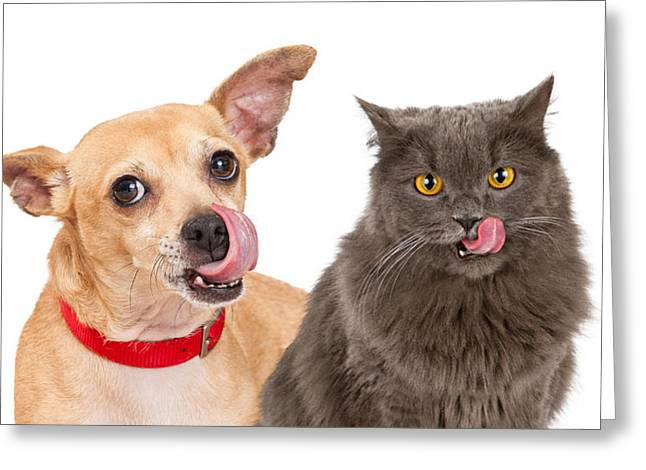 Dog And Cat Licking Lips Greeting Card by Susan Schmitz