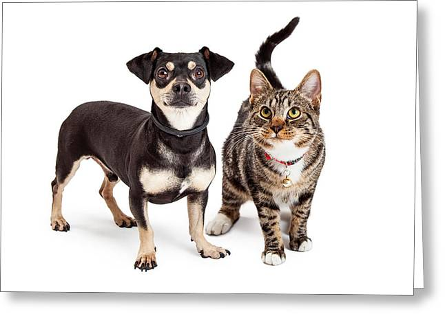 Dog And Cat Standing Looking Up Together Greeting Card