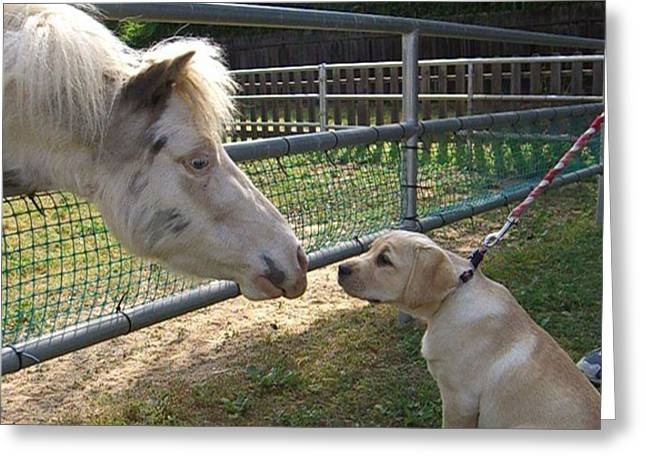 Dog And Pony Greeting Card by Liz Vernand