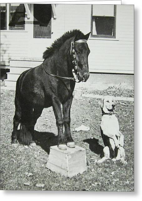 Dog And Pony Show Greeting Card by Krista Barth