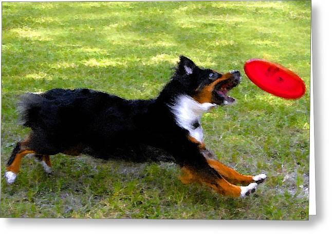 Dog And Red Frisbee Greeting Card