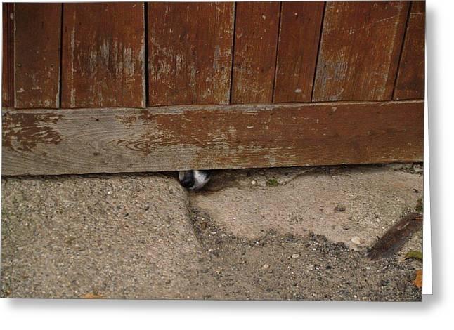 Dog At The Door Greeting Card by Aline Kala