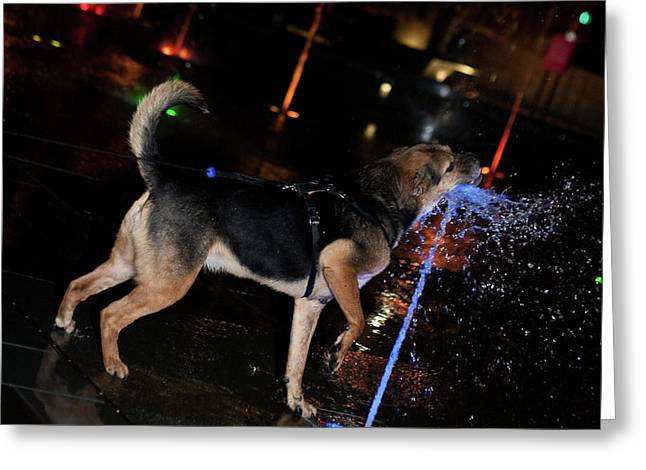 Dog Catching Fountain Greeting Card