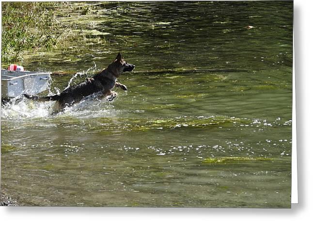 Dog Chasing His Stick Greeting Card