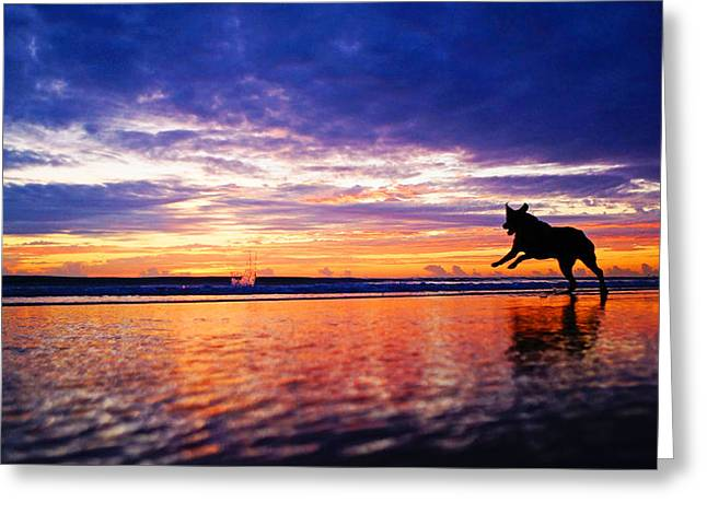 Dog Chasing Stick At Sunrise Greeting Card