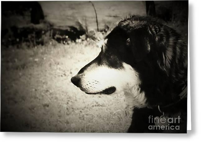 Dog Dog Dog  Greeting Card by Will Nika Brown