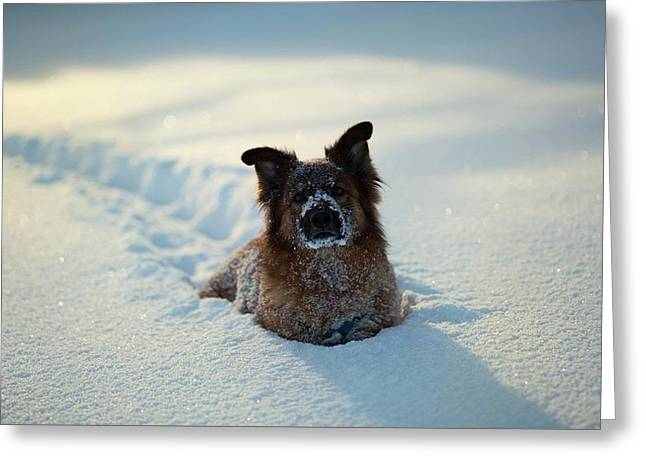 Dog Dog In Snow                   Greeting Card