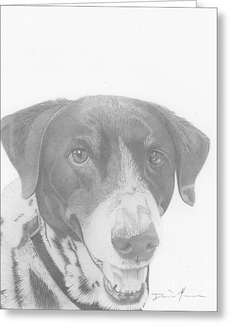 Dog Drawing Orion Greeting Card