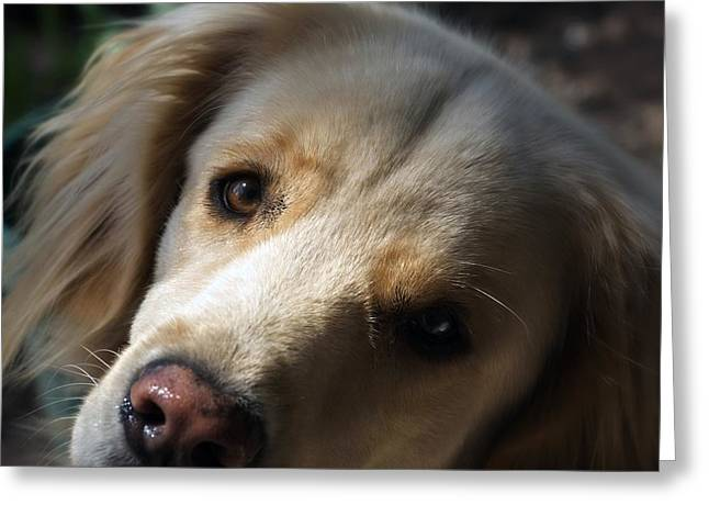 Dog Eyes Greeting Card