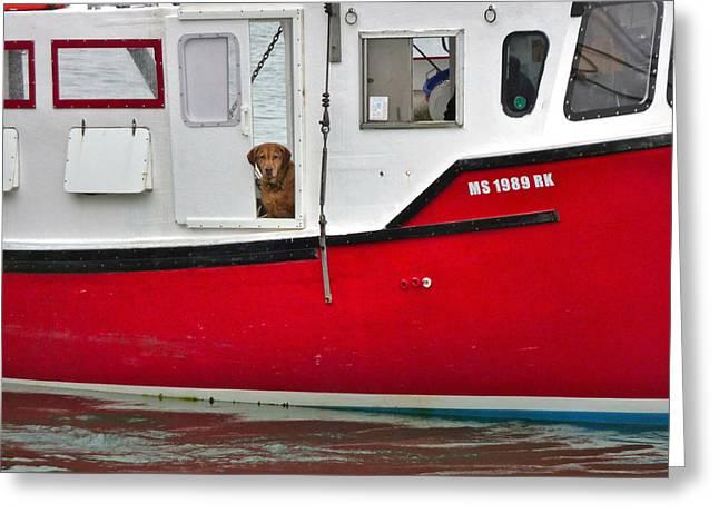 Dog Fishin Greeting Card by Heather MacKenzie