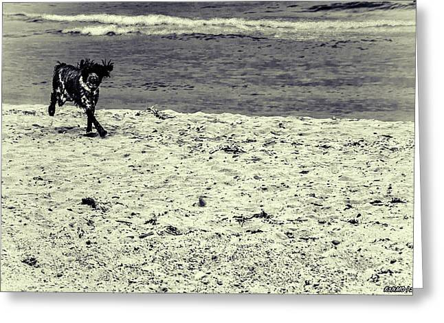 Dog Frolicking On A Beach Greeting Card by Ken Morris