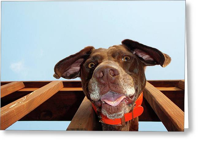 Dog Gone Crazy Greeting Card