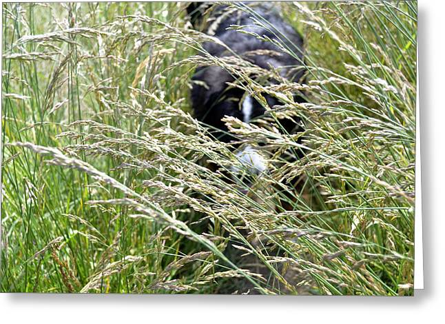 Dog Hiding In The Grass Greeting Card by Pelo Blanco Photo
