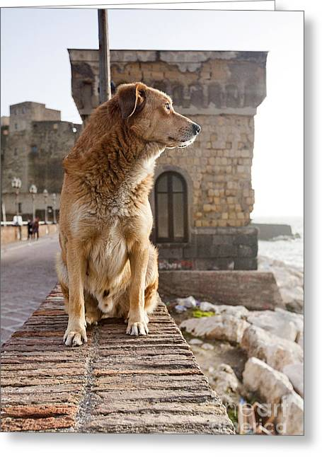 Dog In Naples Castle Greeting Card by Andre Goncalves