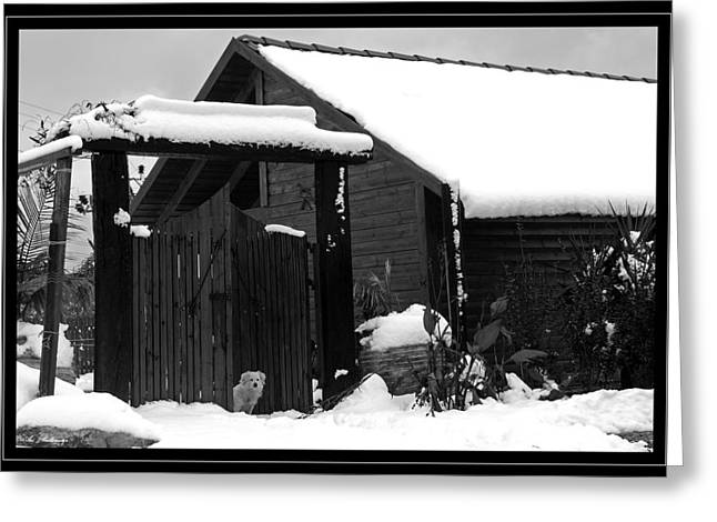 Dog In Snow Greeting Card by Arik Baltinester
