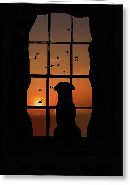 Dog In Window With Birds In Sunset Greeting Card by Stephanie Laird