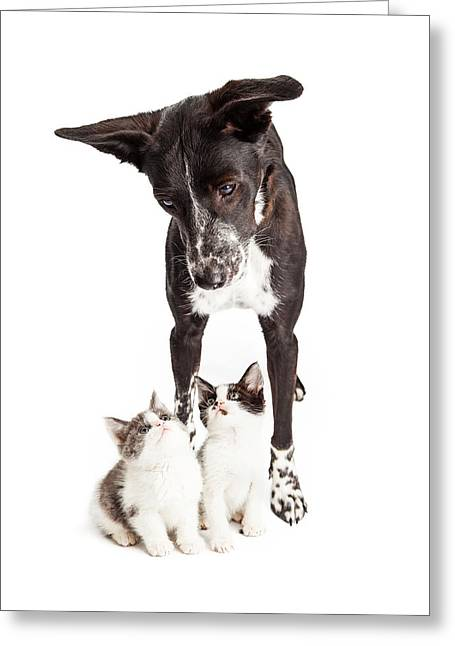 Dog Looking Down At Two Kittens Greeting Card by Susan Schmitz