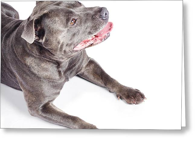 Dog Looking Up To Pet Copyspace Greeting Card by Jorgo Photography - Wall Art Gallery