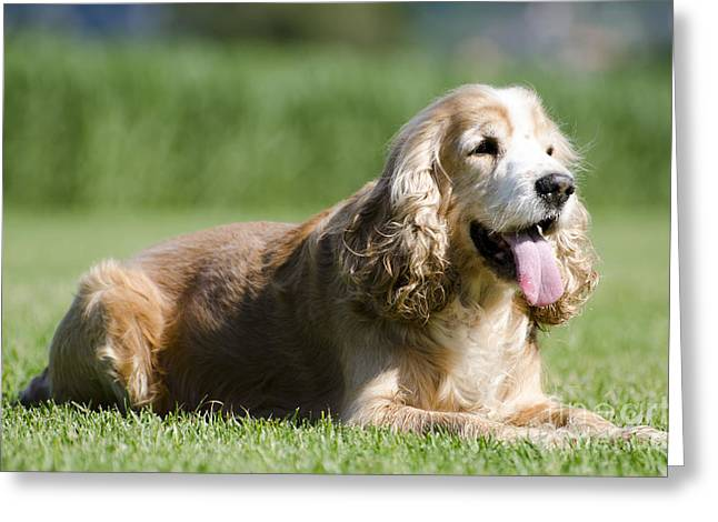 Dog Lying Down On The Green Grass Greeting Card