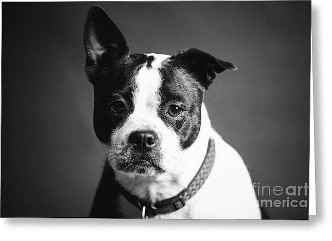 Dog - Monochrome 1 Greeting Card
