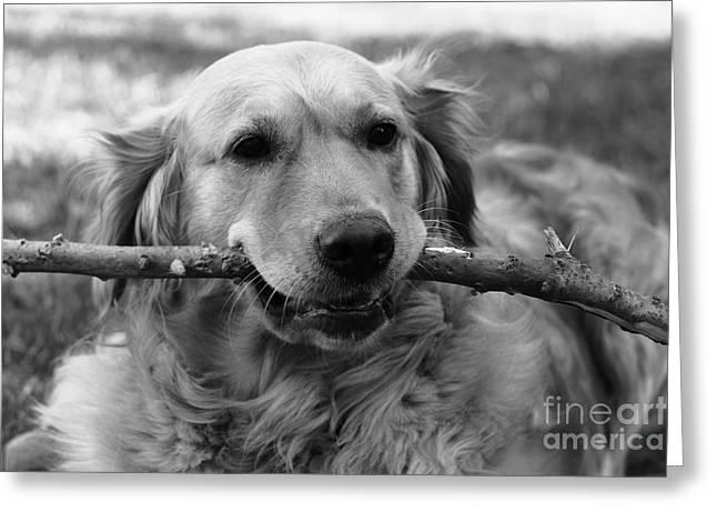 Dog - Monochrome 4 Greeting Card