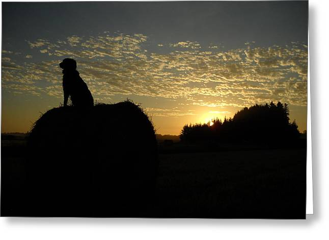 Dog On Hay Greeting Sunrise Greeting Card