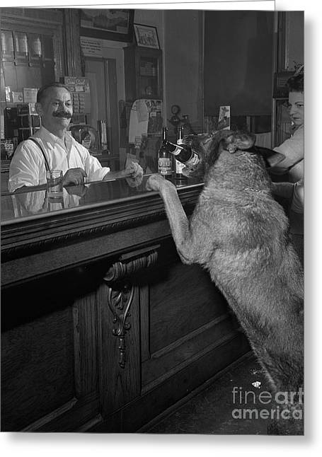 Dog Ordering A Beer Greeting Card by The Harrington Collection