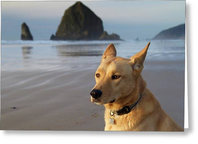 Dog Portrait @ Cannon Beach Greeting Card