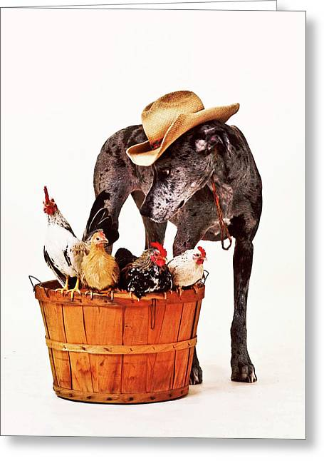 Greeting Card featuring the photograph Dog Sitter by Susan Stone