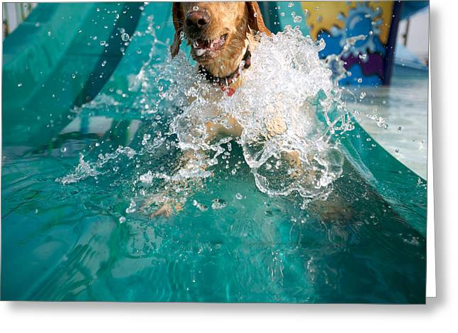Dog Splashing In Water Greeting Card
