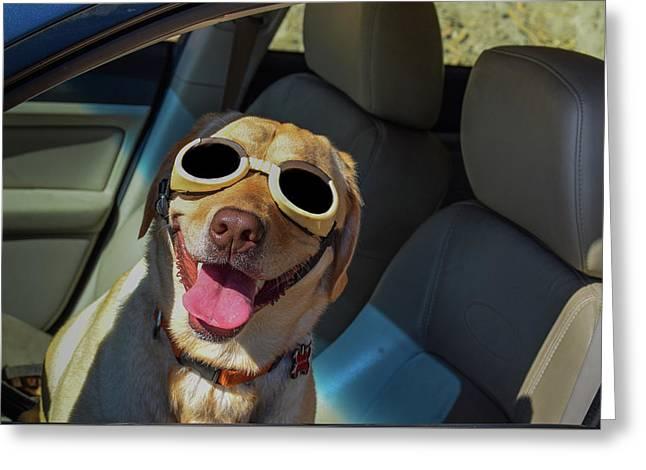 Dog Tested Greeting Card by David A Litman