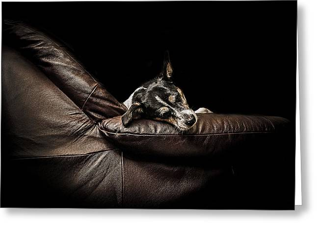Dog Tired Greeting Card by Paul Neville