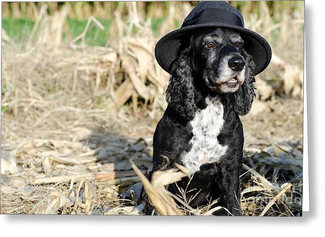 Dog With A Hat Greeting Card