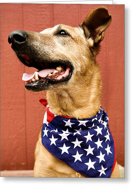 Dog With American Flag Greeting Card