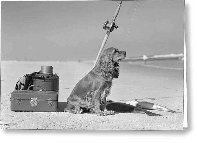 Dog With Fishing Equipment And Catch Greeting Card by H. Armstrong Roberts/ClassicStock