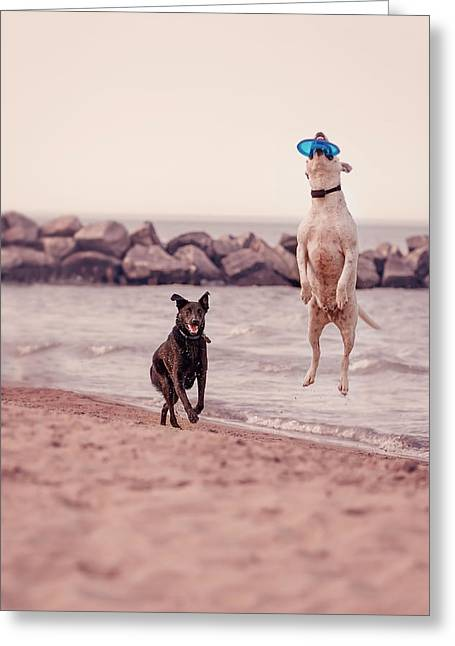 Dog With Frisbee Greeting Card