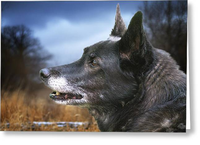Dog With Hackles Up Greeting Card by Donald  Erickson