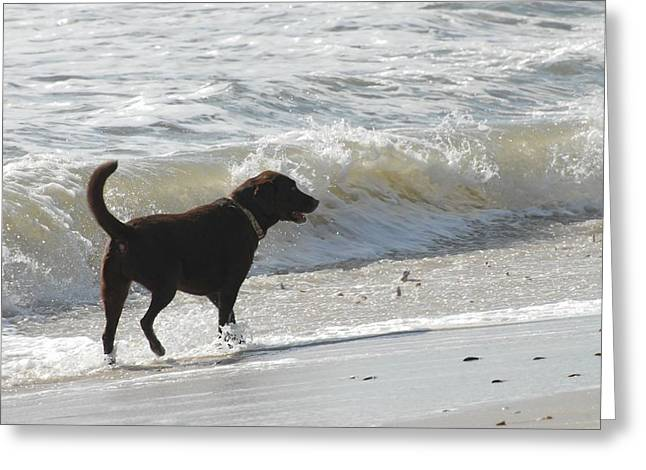 Dog Beach Card Greeting Cards - Dogs 43 Greeting Card by Joyce StJames
