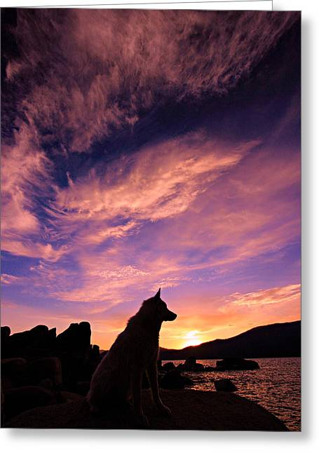 Greeting Card featuring the photograph Dogs Dream Too  by Sean Sarsfield