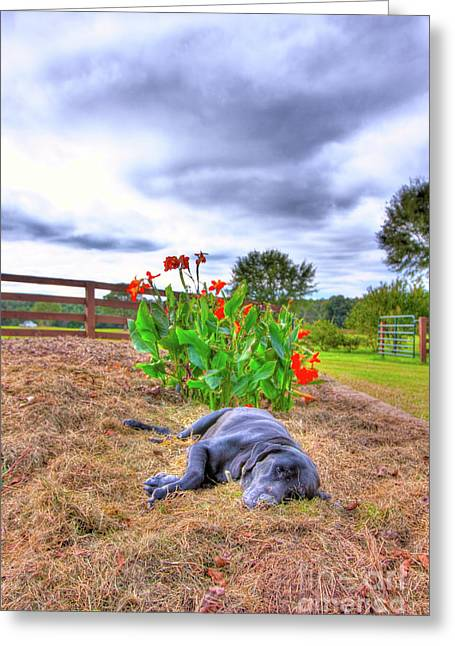 Dog's Life Greeting Card by Ted Reynolds